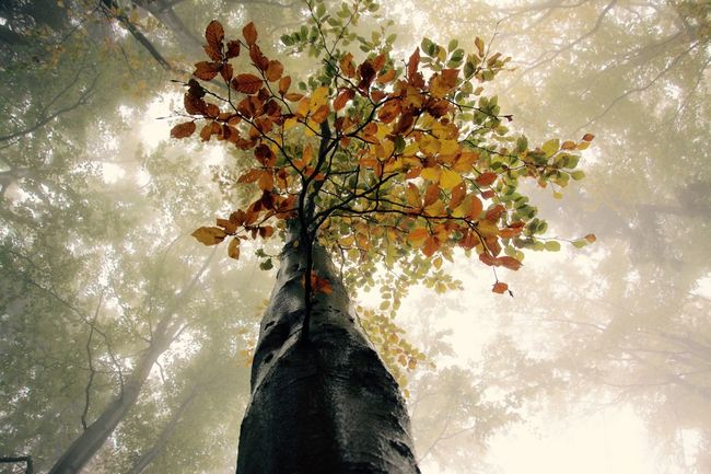 Taking Photos Getting Inspired Eye4photography  Nature Nature_collection Trees Landscape Eyem Best Shots