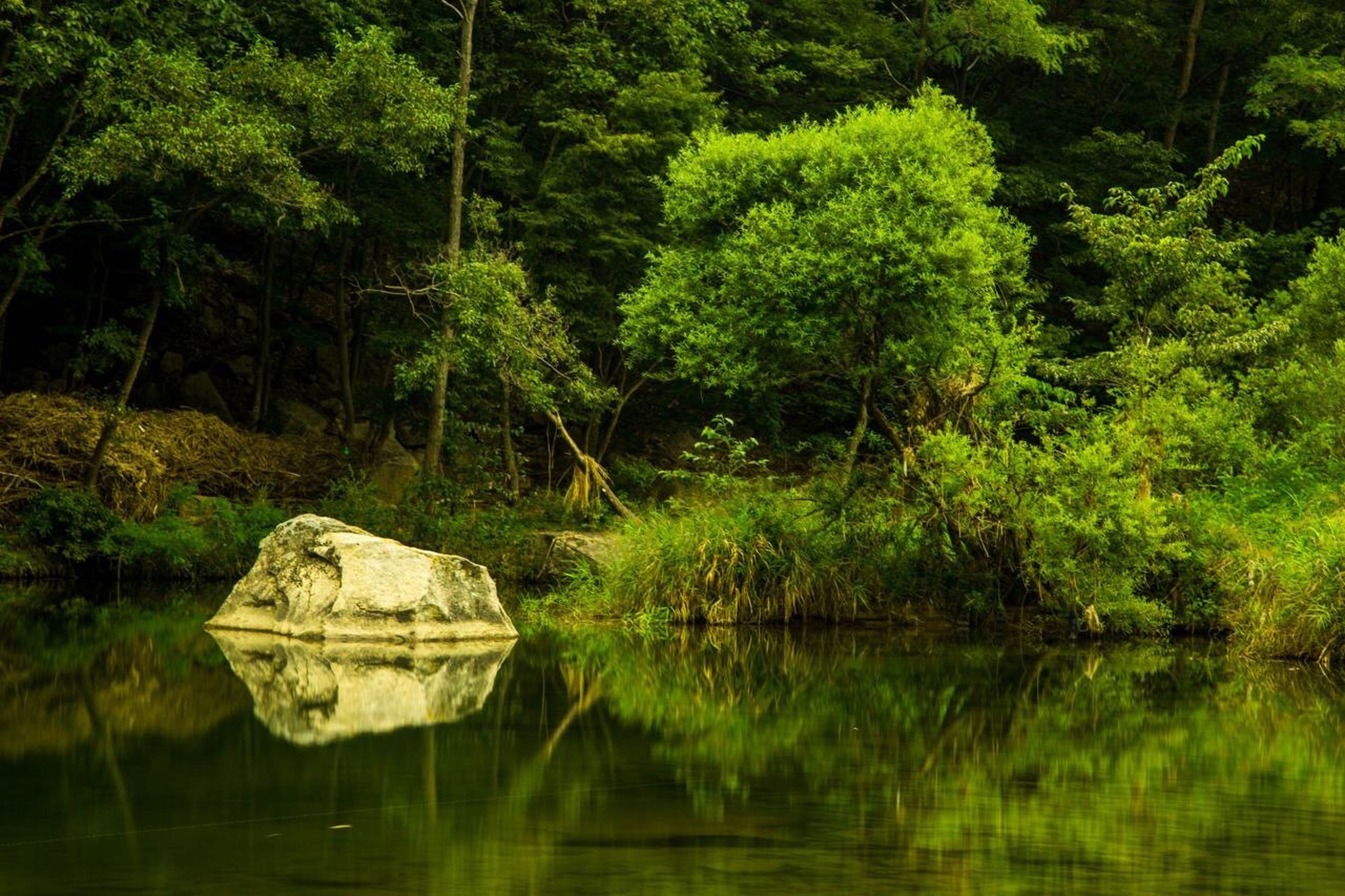tree, water, reflection, waterfront, lake, tranquil scene, tranquility, scenics, green color, non-urban scene, beauty in nature, nature, growth, calm, day, standing water, greenery, no people, lush foliage