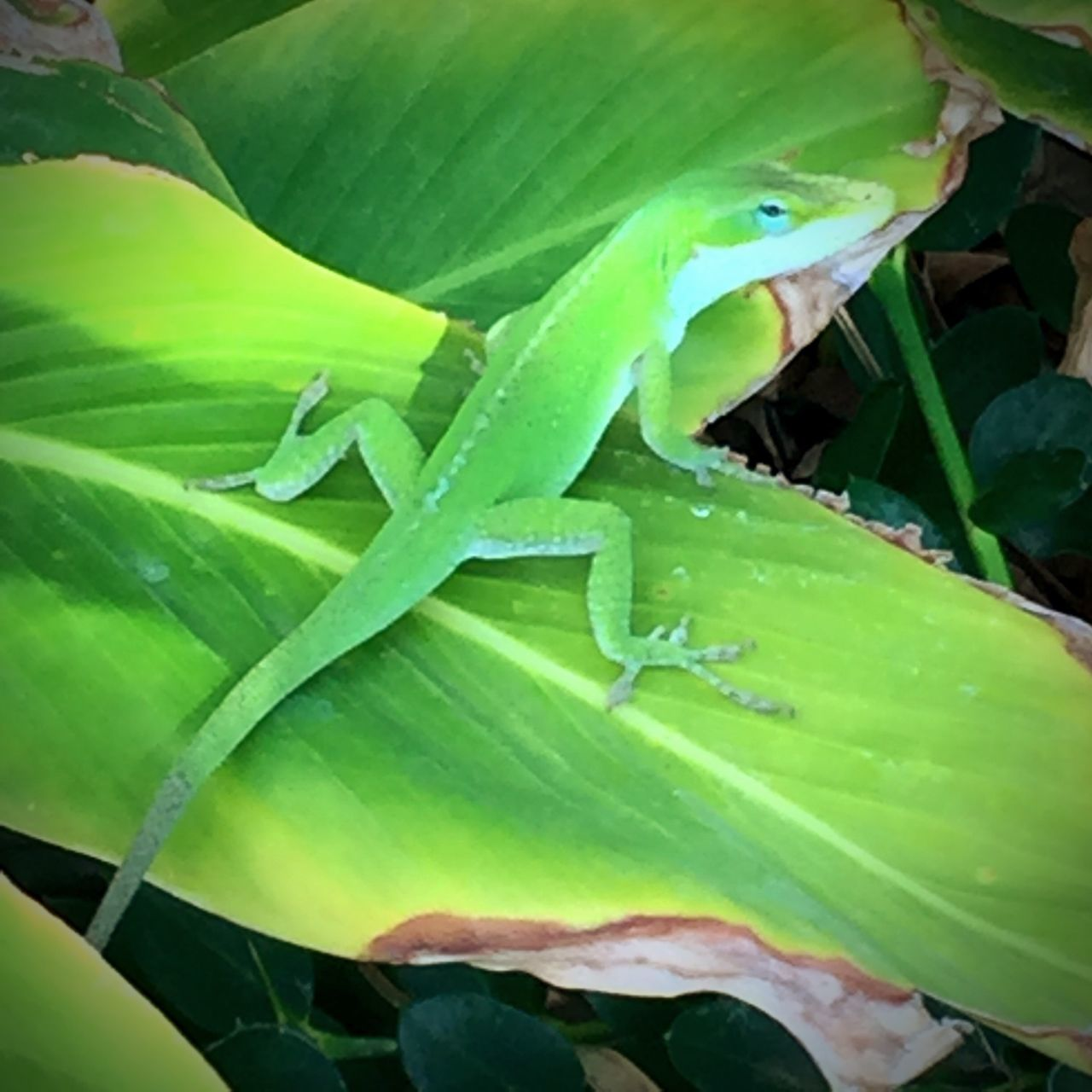 leaf, green color, no people, plant, nature, growth, close-up, day, one animal, outdoors, animal themes, animals in the wild, beauty in nature, grasshopper, freshness