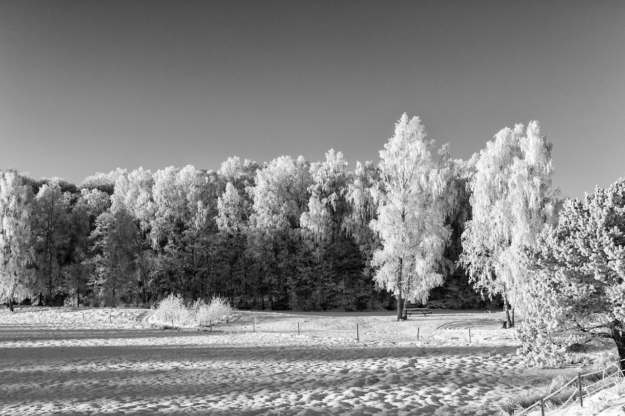 Winter landscape (bnw version) - Nature Tree Clear Sky Outdoors Scenics Landscape Treelined Winter Snow Tranquil Scene Tranquility Monochrome Photography Monochrome Hello World First Eyeem Photo Exceptional Photographs Eye4photography  EyeEm Best Shots - Black + White The Week Of Eyeem EyeEm Masterclass Cold Temperature Blackandwhite (null)Black And White Black & White