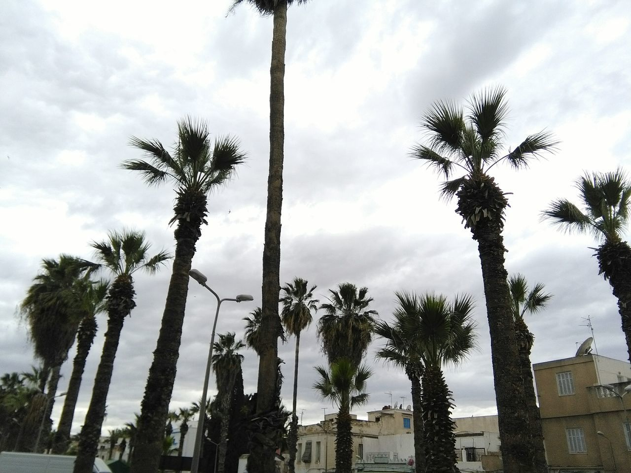 Hugging A Tree Eyeem Tunisia Place Public Green Park