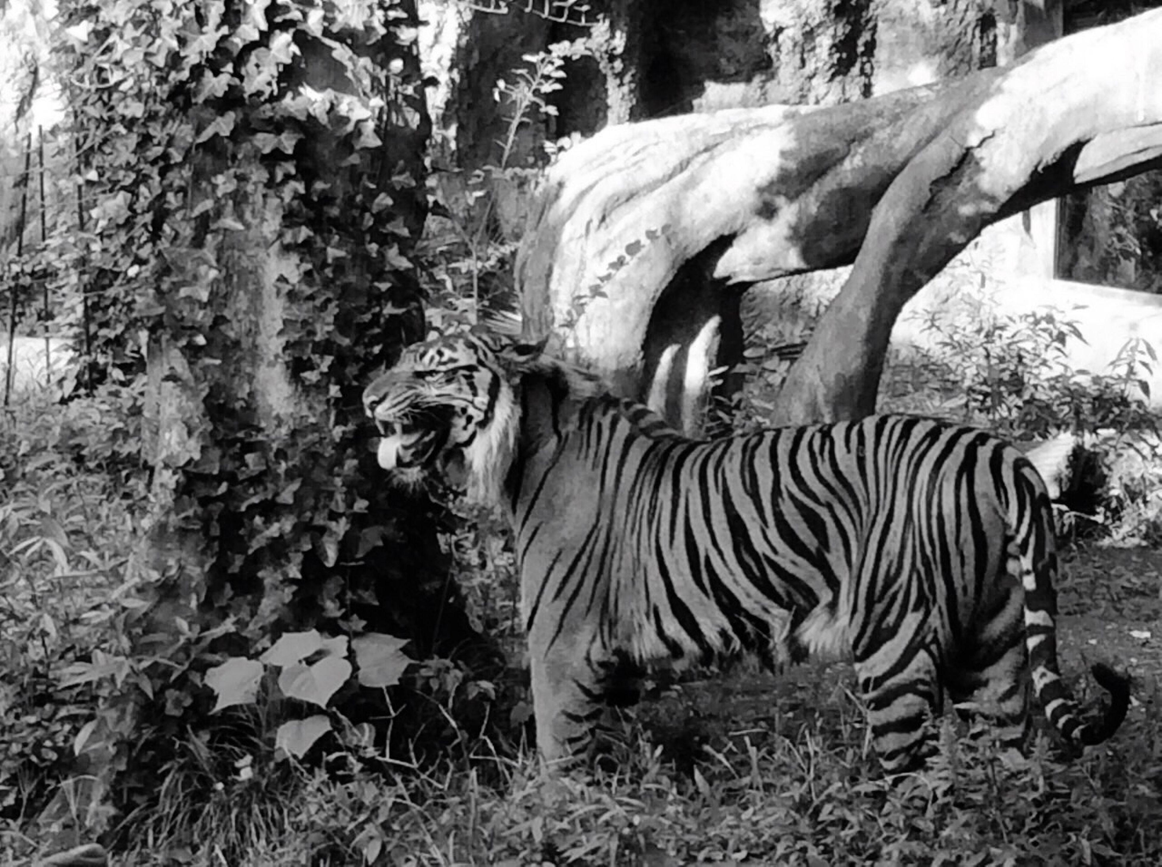 Zoo Taking Photos Hello World Animal Blackandwhite Iphonephotography EyeEm Best Edits EyeEm Best Shots