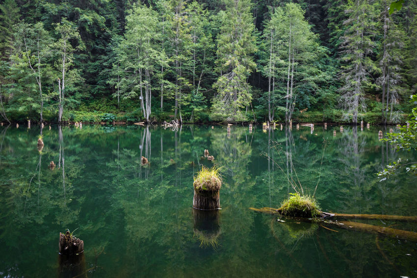 Lake Tree Forest Color Nature Log Water Pond Reflection Trees Landscacpe Scenics