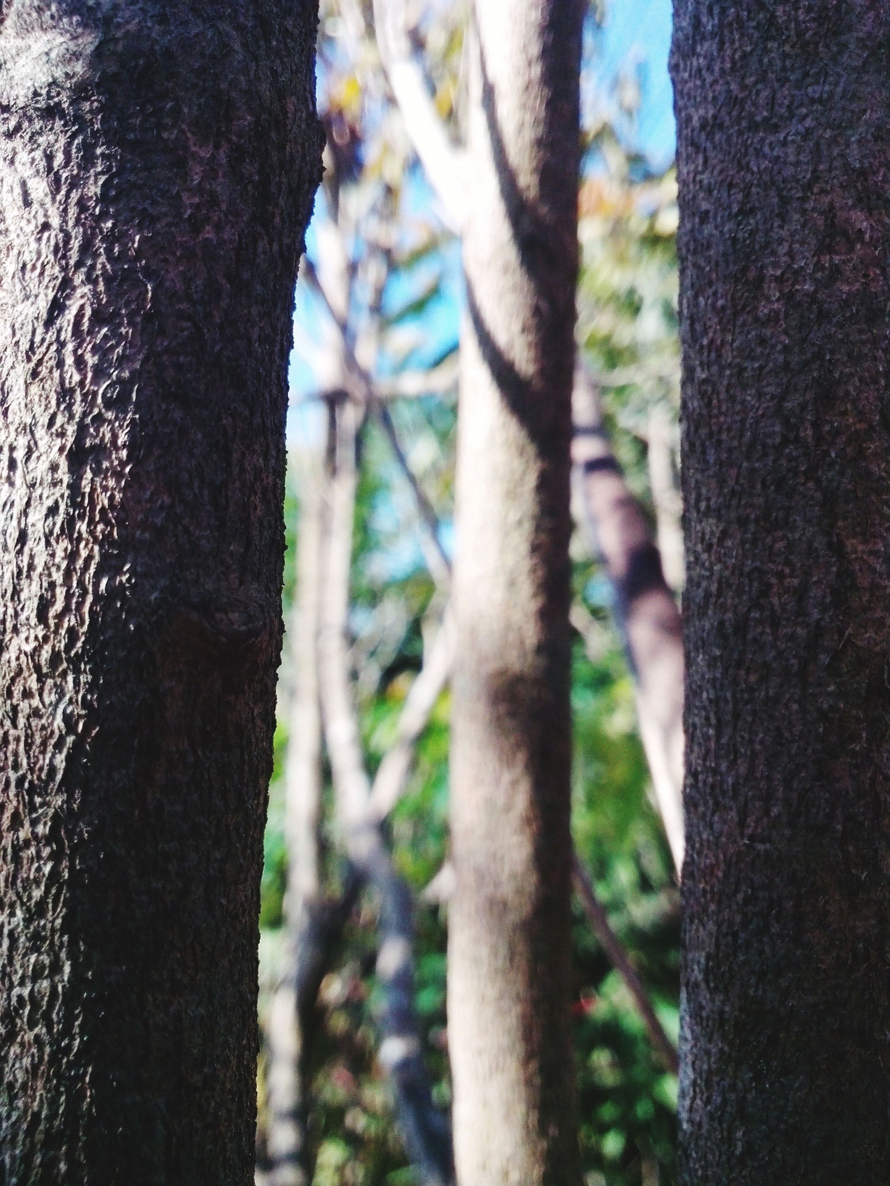 tree trunk, tree, focus on foreground, close-up, textured, nature, branch, growth, outdoors, day, tranquility, part of, selective focus, no people, forest, bark, sunlight, beauty in nature, wood - material, rough