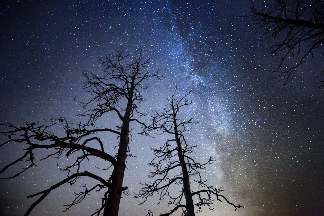 Two dead trees at night with stars and the Milky Way on the sky Astronomy Bare Tree Beauty In Nature Darkness Deadwood  Galaxy Low Angle View Milky Way Mysterious Mysterious Landscape Nature Night Night Sky No People Outdoors Scenics Silhouette Sky Star - Space Stars Tranquility Tree Tree Trunk Trees Twilight