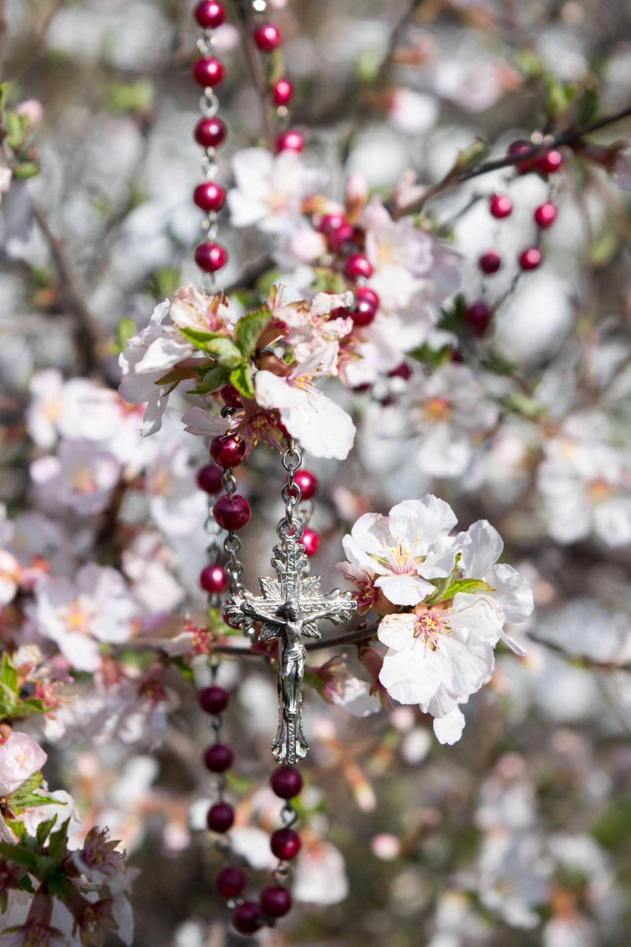 Beads Beauty In Nature Blossom Branch Close-up Day Easter Faith Flower Flower Head Fragility Freshness Good Friday Growth Hanging Jesus Christ Nature No People Outdoors Red Rosery Selective Focus Springtime Tree White Color
