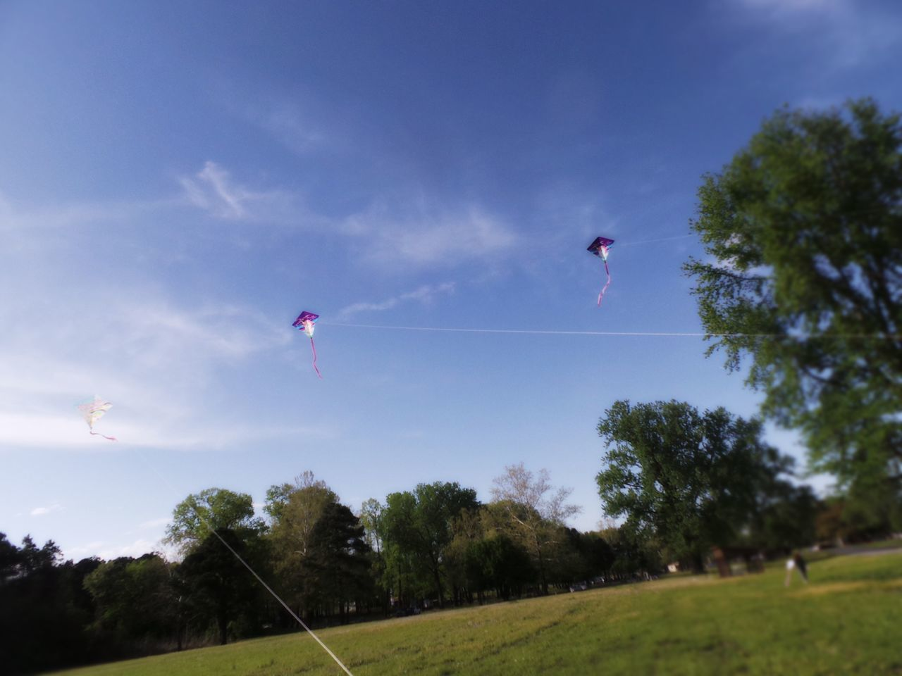 Flying Kites. Summertime Bright Light Clear Sky Summer Day Playing Outdoors Unobstructed Sunlight Playing In A Meadow Kites High In The Air Three Kites