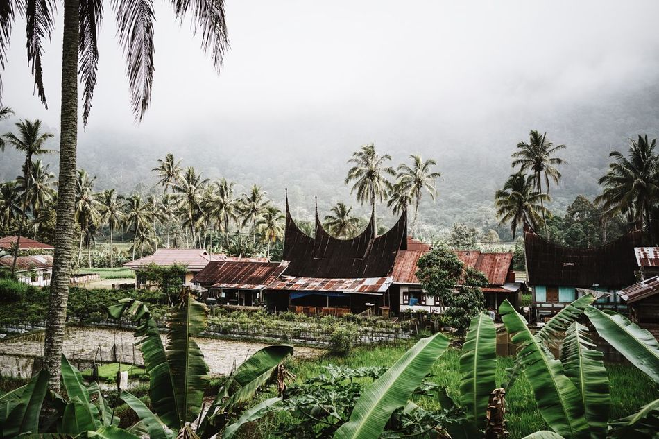 Tropical Climate Palm Trees Rainy Days Foggy Rainy Season Sumatra  Buildings Village Rural Scene ASIA INDONESIA Rusty Traveling