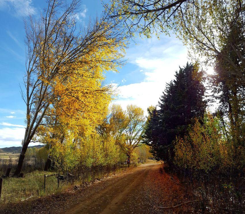 Autumn Autumn Colors Autumn🍁🍁🍁 Karooheartland Karoolife Karoospaces Samsung Samsung Galaxy S6 Samsung Galaxy S6 Edge Samsungphotography
