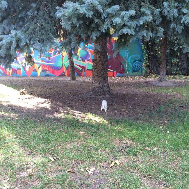 Albino Squirrl Beauty In Nature Day Domestic Animals Nature Park Toronto Canada White Squirrel カナダ 白い動物 白リス