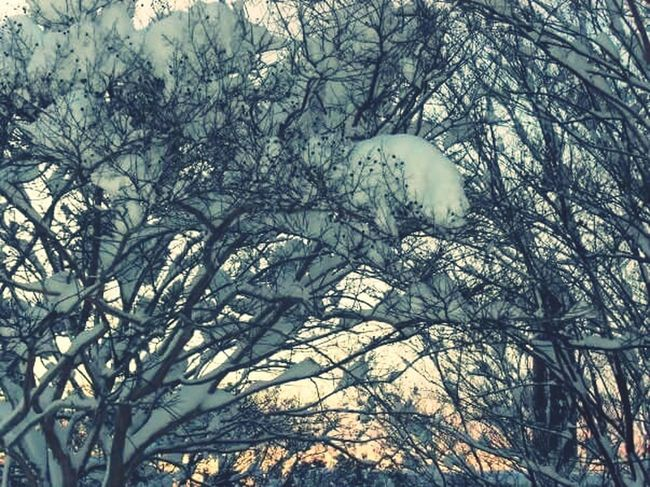 Snowy Sunset Snow Accumulation Snowy Branches A Ray Of Sunshine Ray Of Hope My Winter Favorites It's Cold Outside Snow Covered Trees Snow Accumulation