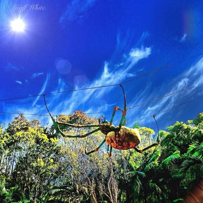 Not a real spider at currumbin by Geoff White