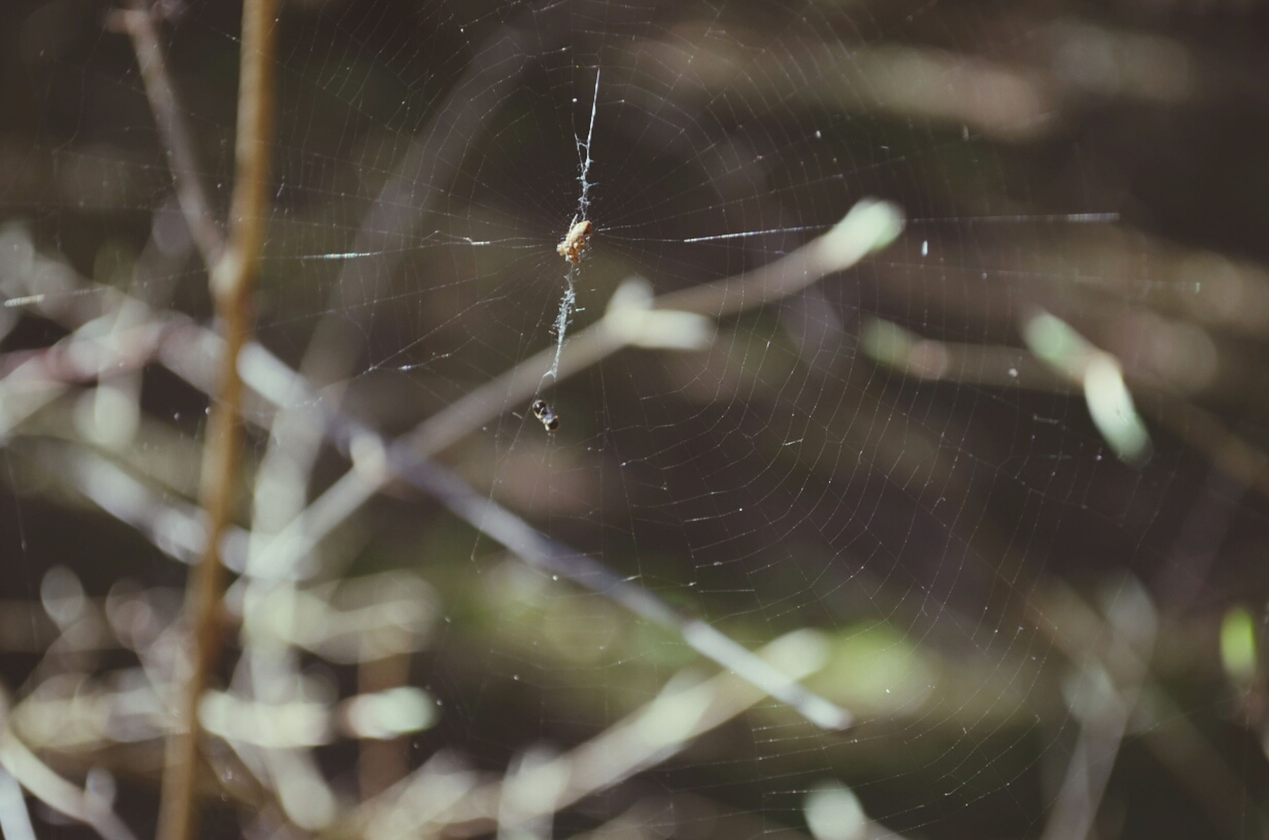 water, focus on foreground, drop, close-up, spider web, wet, selective focus, nature, fragility, outdoors, day, unrecognizable person, motion, rain, part of, plant, lifestyles, person