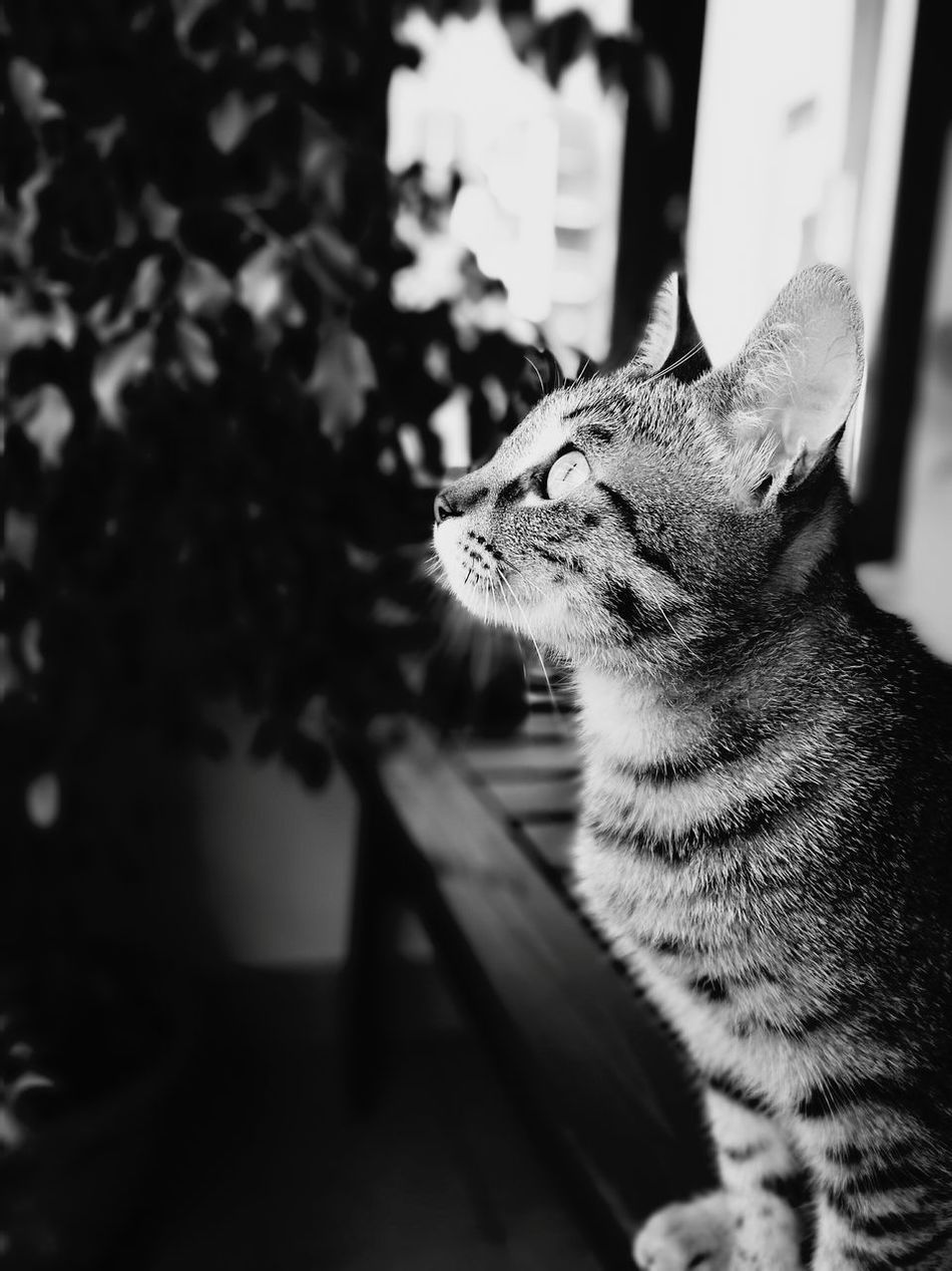 Cat Cats Animals Felino Guardare Curiosity Eye Biancoenero Nature Beautiful Cheese! Model