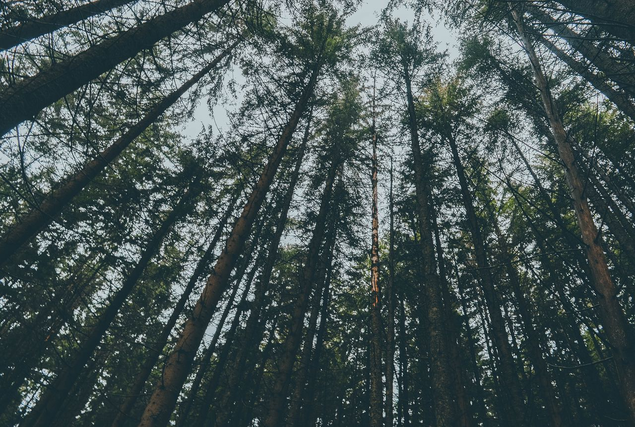 Trees Trees And Sky Tree_collection  Nature Photography Nature Photographer Traveling Travel Traveler Nikon Poland Morskieoko Forest Green Color Low Angle View No People Sky Mountainlake Mountains Mountain First Eyeem Photo