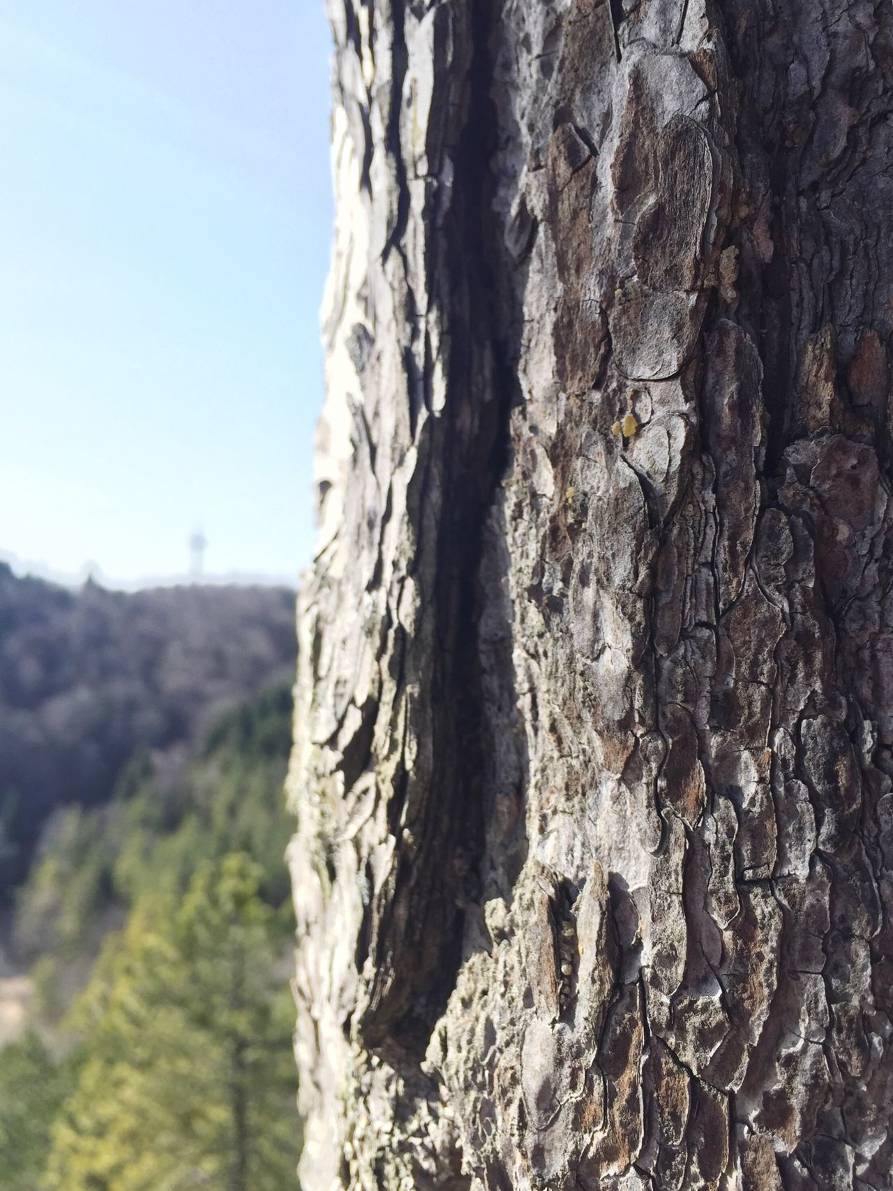 Nature Nature_collection Nature Photography Tree Trunk Tree Focus Focused Plettenberg Wood WoodLand Forest Forest Photography Nice Nice Day Bestoftheday