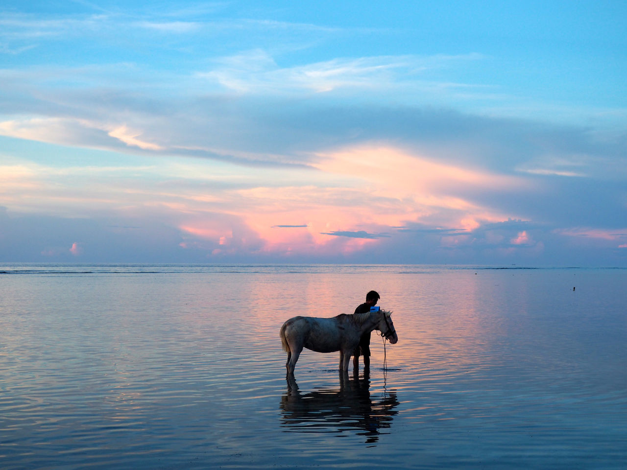Beautiful stock photos of einhorn, Animal Themes, Beauty In Nature, Cloud, Cloud - Sky