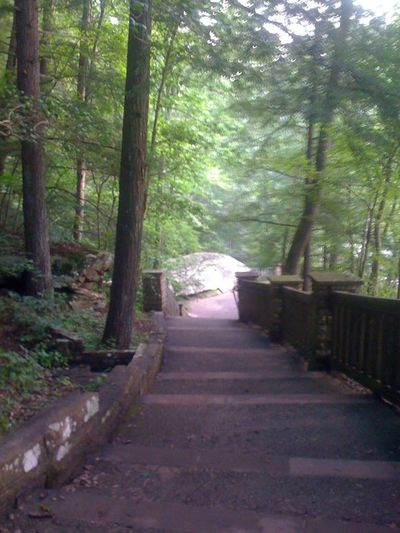 Park Nature