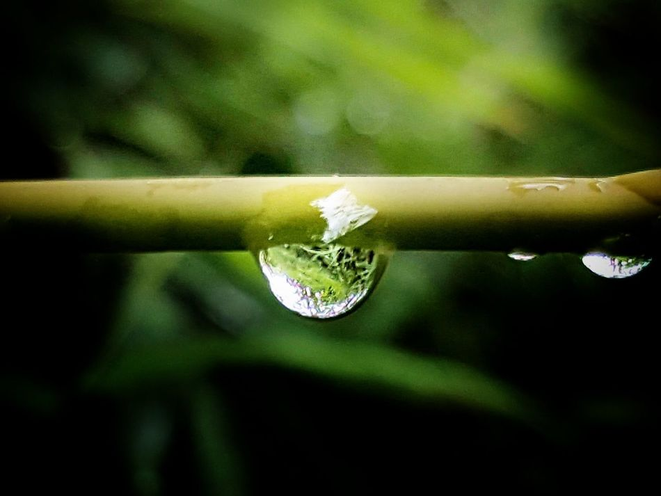 Droplet Close-up Water Beauty In Nature Freshness At Home Sweet Home Beauty In Nature RainDrop Quietly