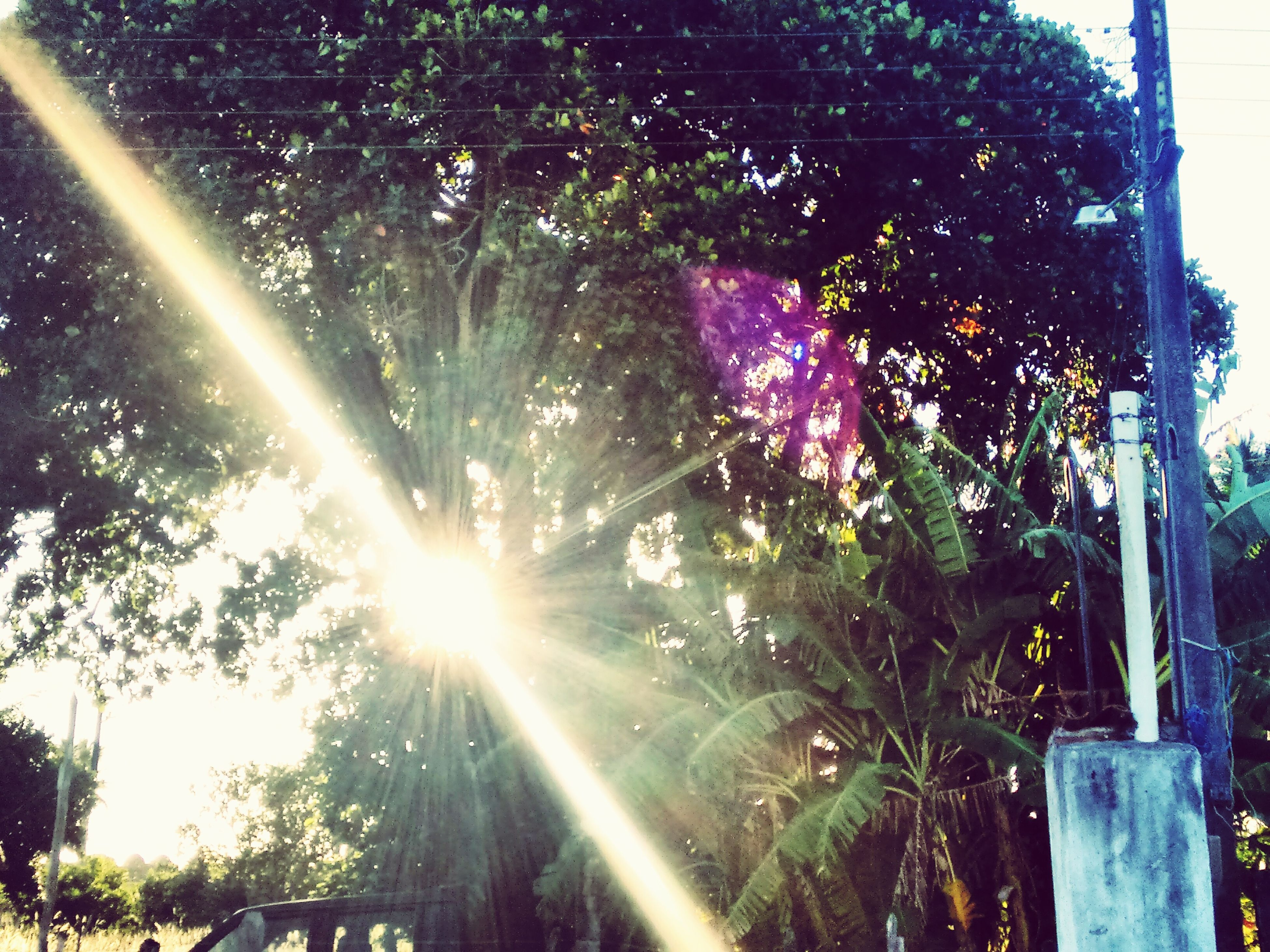 sunbeam, tree, sunlight, lens flare, sun, growth, low angle view, nature, plant, day, outdoors, beauty in nature, sunny, no people, park - man made space, flower, bright, built structure, front or back yard, close-up