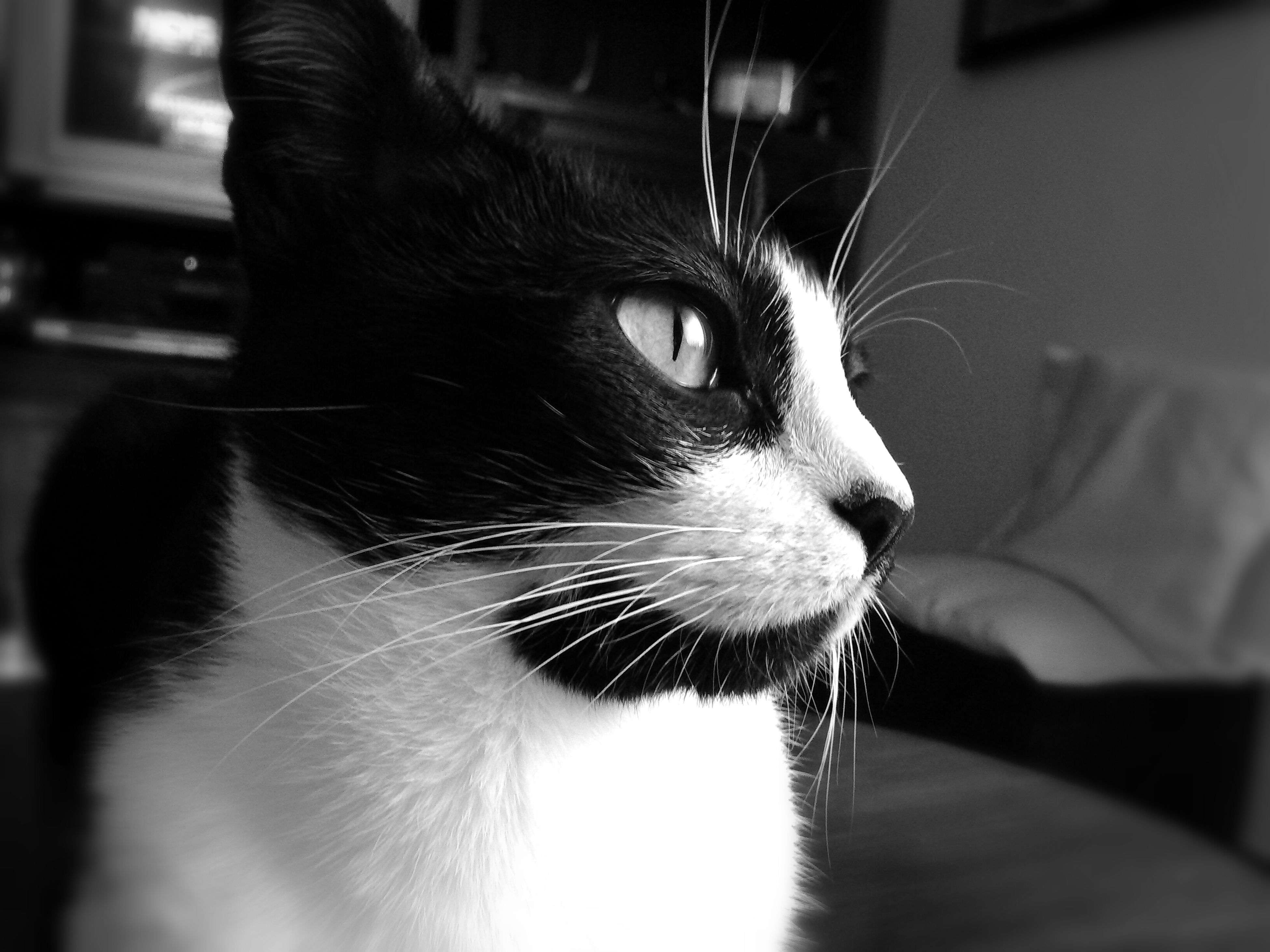 pets, domestic cat, domestic animals, one animal, cat, animal themes, mammal, indoors, feline, whisker, close-up, animal head, focus on foreground, looking away, animal body part, selective focus, part of, animal eye, no people, home interior