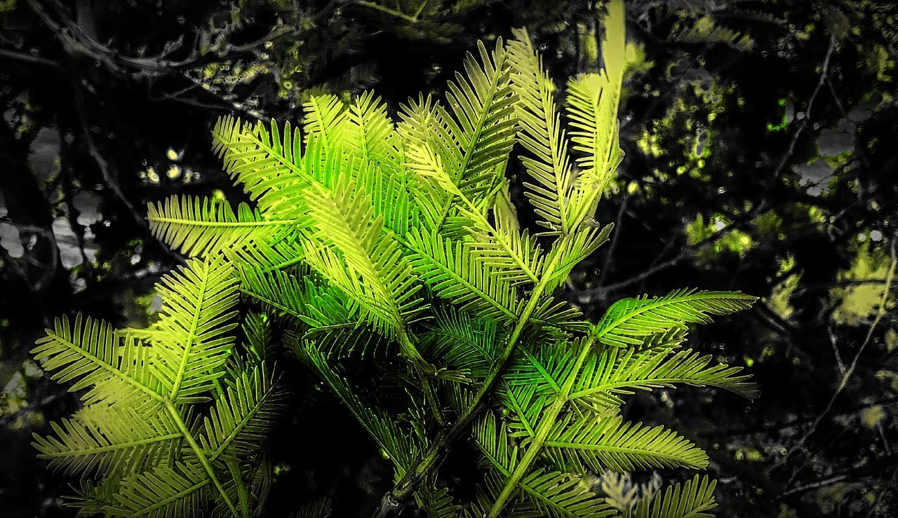 green color, growth, nature, beauty in nature, no people, day, leaf, focus on foreground, close-up, outdoors, fern, tree, freshness