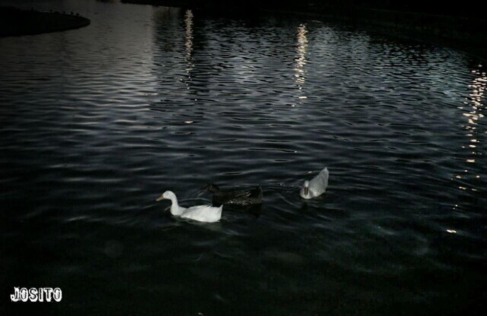 Al agua patooos! Somosfelices ParlaEste Nature Españoles Y Sus Fotos