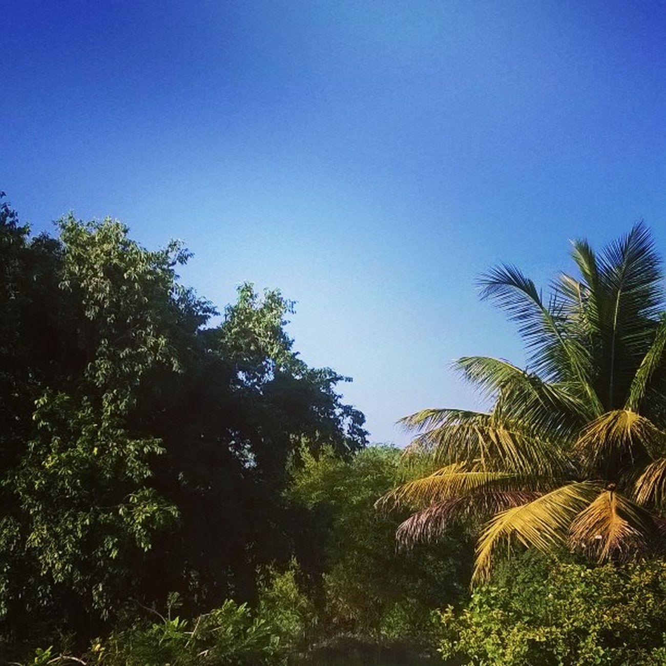 Sunnyday CARIBBEANLIFE Trini2dbone Nature