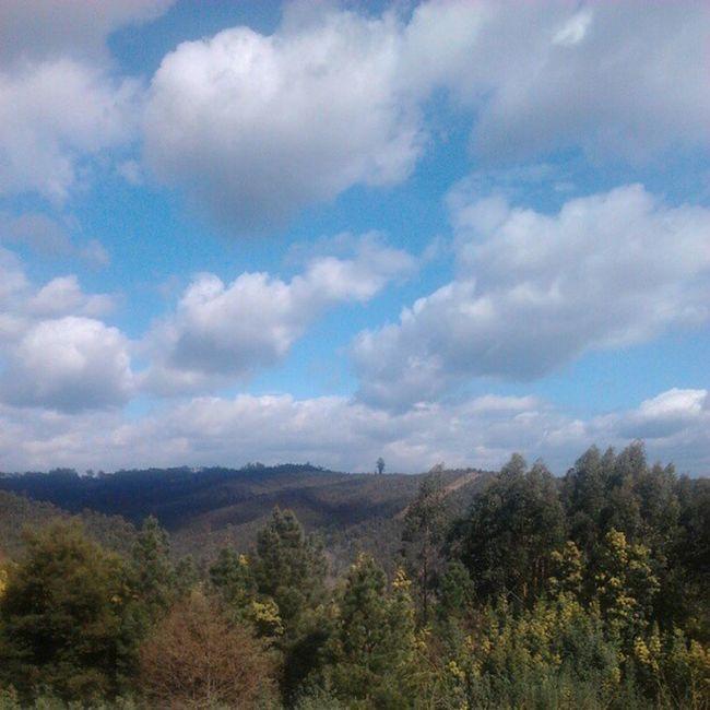 Bom dia Sever do Vouga! Nofilter Semfiltro Normal Severdovouga Mountain Trees Nature Sky Blue Green Montanha Vale árvores Natureza Azul Céu Verde