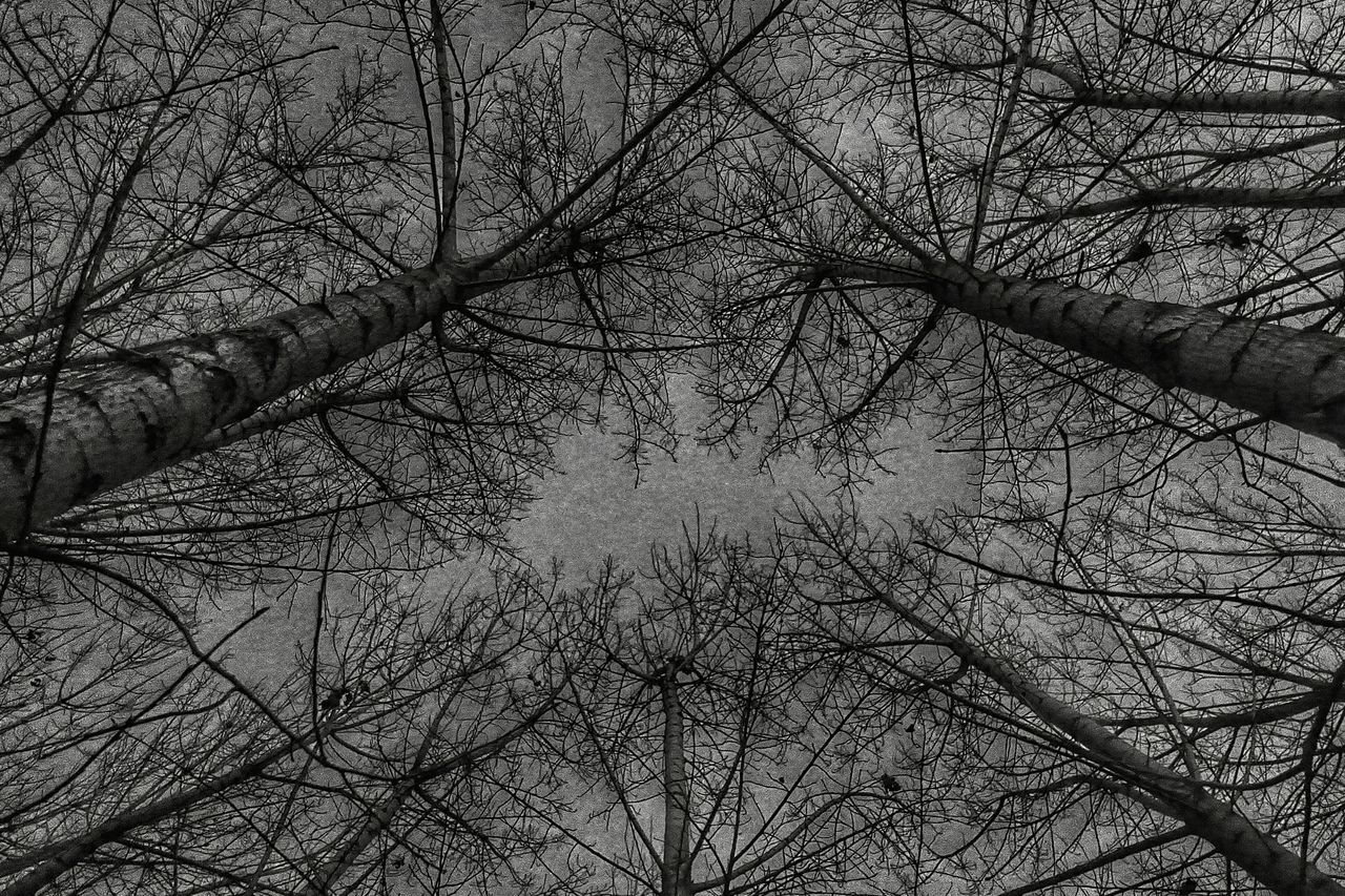 China Photos Lookingup Tree Treepark Hugging A Tree Winter Trees Travel Taking Photos Showcase: January Nightphotography Streamzoofamily