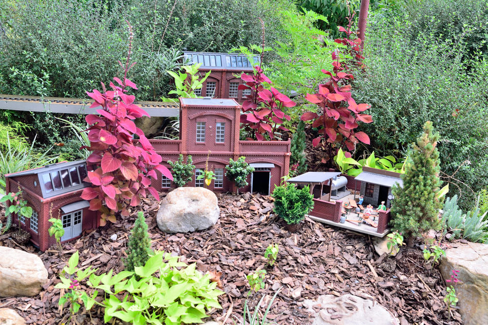 Locomotion In The Garden 8 Atlanta Botanical Gardens Garden Railroad Still Life Still Life Photography Trains 3 Dimensional Living Sculpture Made To 1/2 Inch Scale Miniature Railroad Exhibit Creator : Paul Busse Of Applied Imagination Buildings Sculpted From Natural Materials Bark,twigs,nuts,acorns,seeds,mosses,pinecone Scales Landscaping Dwarf Plants Landscape_lovers 1/4 Mile Of Track 7 Trains 20 Bridges Passenger /freight /steam Trains Train Lovers Railroad _collection Railroad Photography Garden_collection Garden Garden Photography Landscape _collection