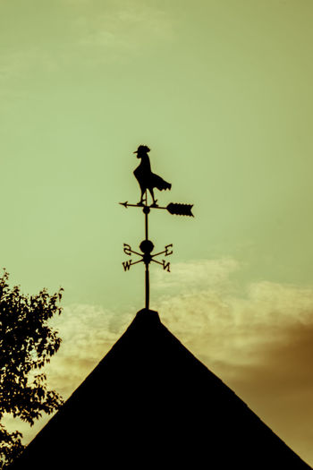 """Le coq"" from the past 18-105mm Banderolas Retro Roof Sony A6300 Architecture Banderole Building Exterior Built Structure Canada Coast To Coast Cloud - Sky Clouds And Sky Day Direction Guidance Low Angle View Nature Navigational Compass No People Outdoors Retro Styled Roof Silhouette Sky Weather Vane"