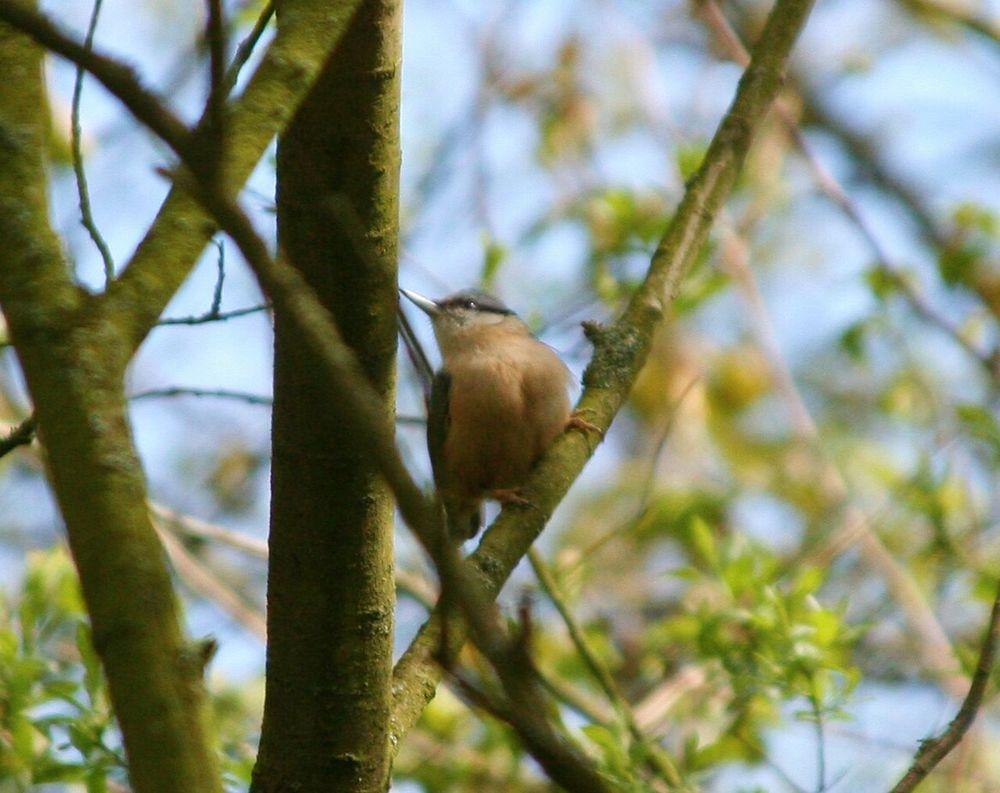 Nuthatch EyeEm Birds EyeEm Best Shots - Nature Streamzoofamily EyeEm Best Shots