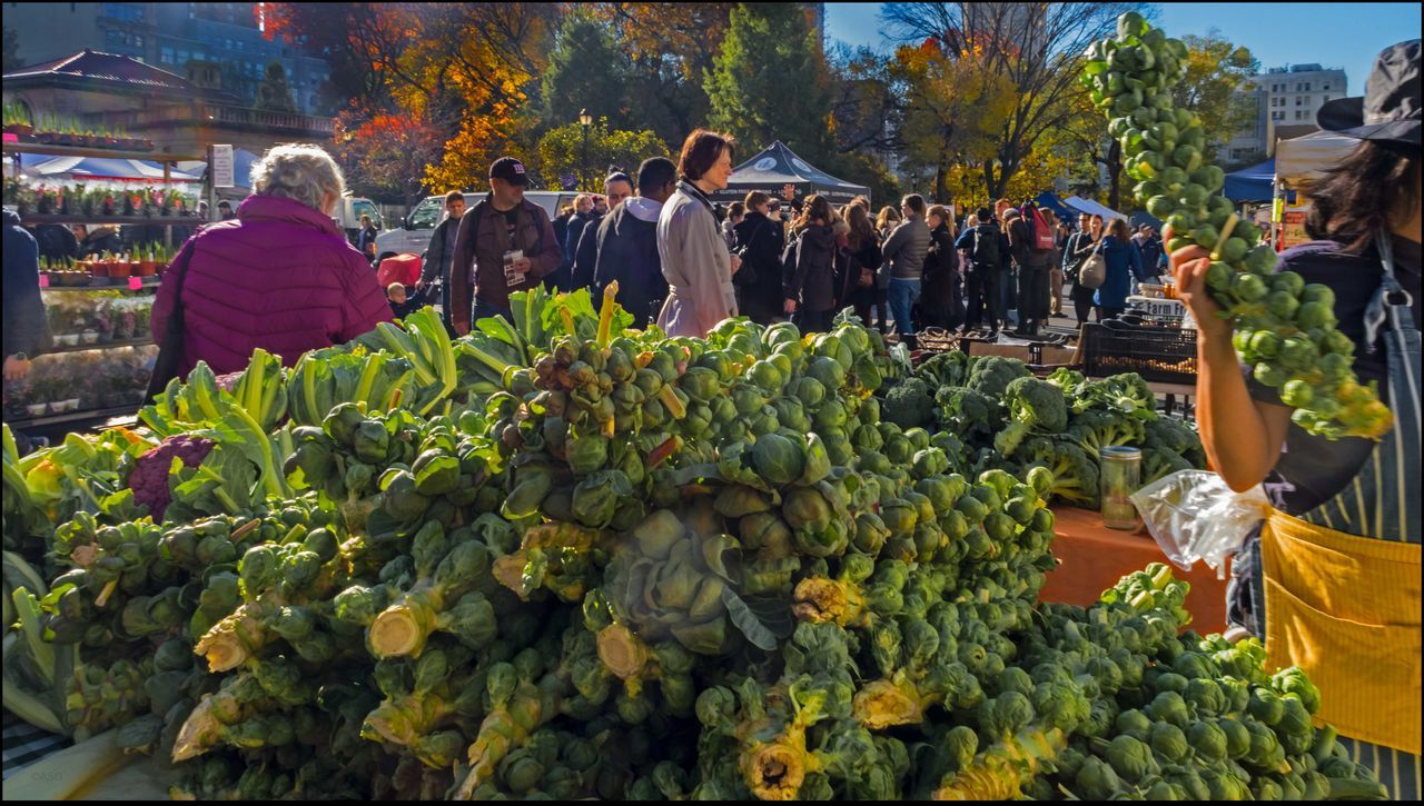 vegetable, market, real people, healthy eating, food, food and drink, fruit, large group of people, day, market stall, women, men, outdoors, freshness, green color, farmer market, tree, people, adult