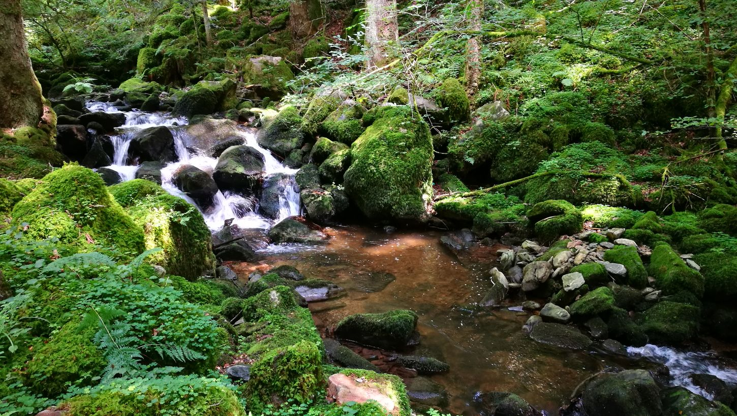 Water Nature Green Color Outdoors Beauty In Nature Forest Tree Day No People Tranquility Growth Scenics