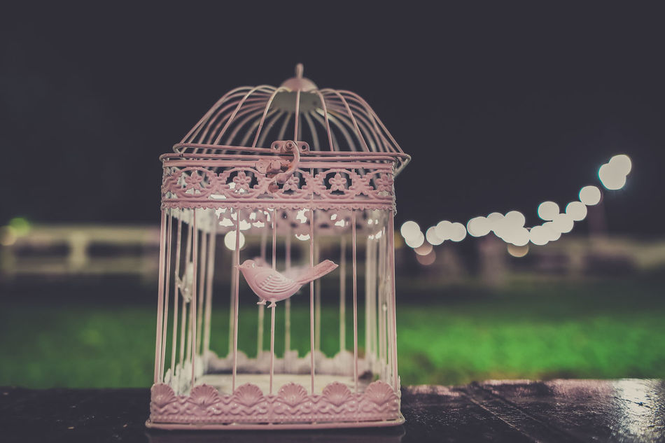 Bird Bird Photography Cage Caged Celebration Close-up Grass Night No People Outdoors