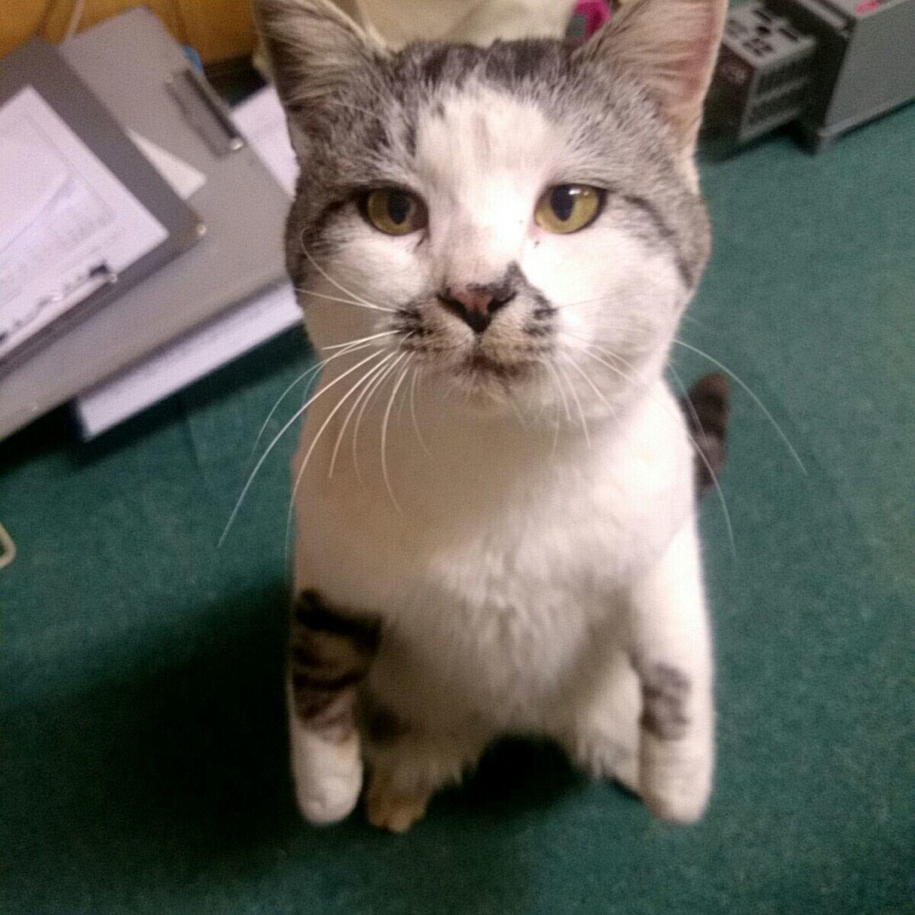 第50話「立ってごらん」 「私・・・私・・・立ったわ・・・」(ΦωΦ) 「クララが・・・立ってる・・・・うわーん!!」👧 アルプスの少女ハイジ ねこ Cat ニャンコ先生