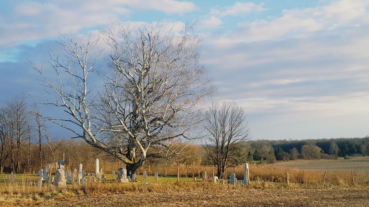 A favorite on my commute is this tree keeping guard Sky Cloud - Sky Nature Tree Tree Branches Cemetery_shots Cemetery Morning