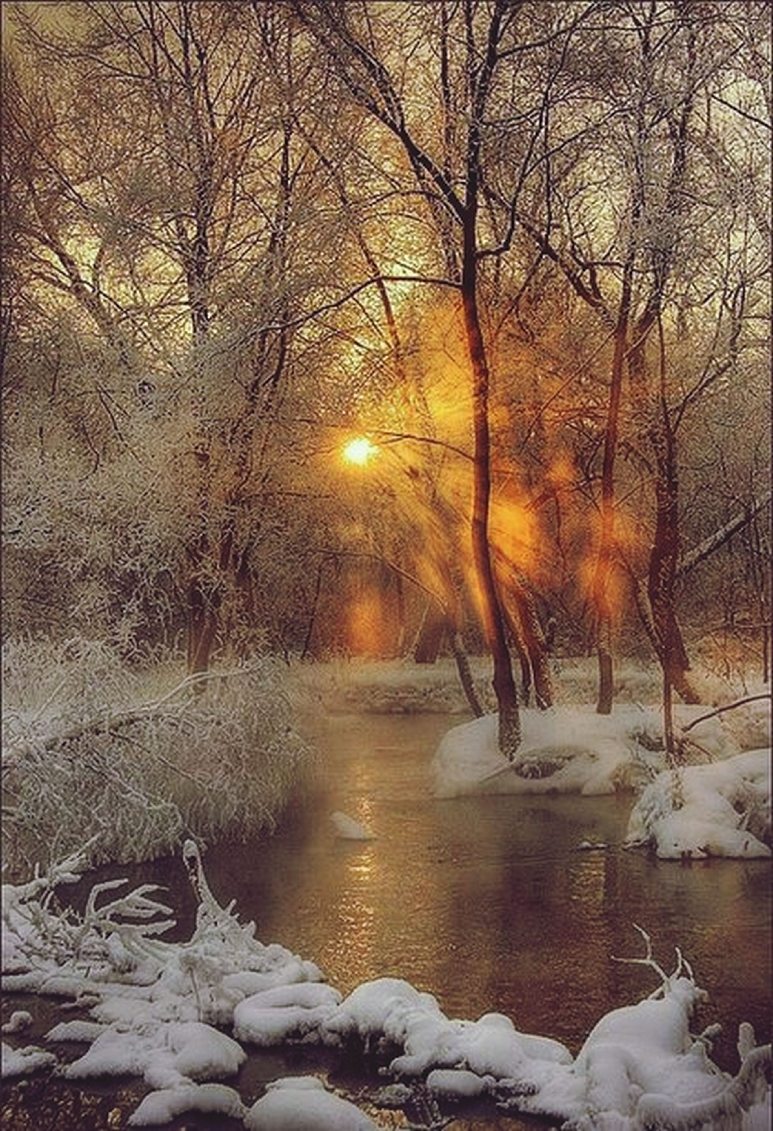 snow, winter, cold temperature, season, bare tree, weather, tree, frozen, sunset, covering, tranquil scene, tranquility, beauty in nature, nature, scenics, sun, branch, landscape, covered, cold