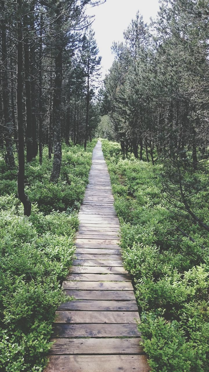Narrow Pathway Along Trees In Park