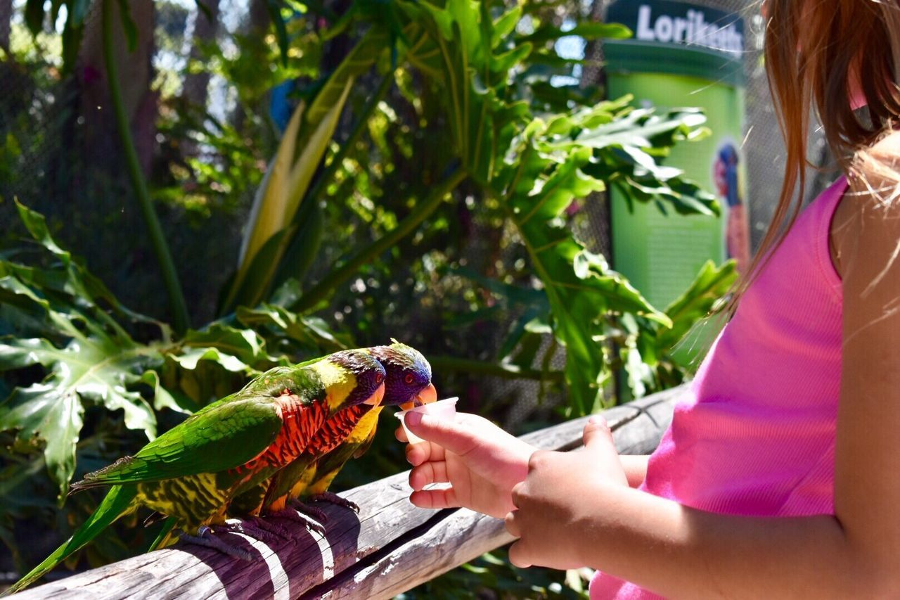 Real People One Person One Animal Holding Human Hand Outdoors Animals In The Wild Day Bird Lifestyles Animal Wildlife Human Body Part Leisure Activity Women Nature Tree Perching Freshness Rainbow Lorikeet People