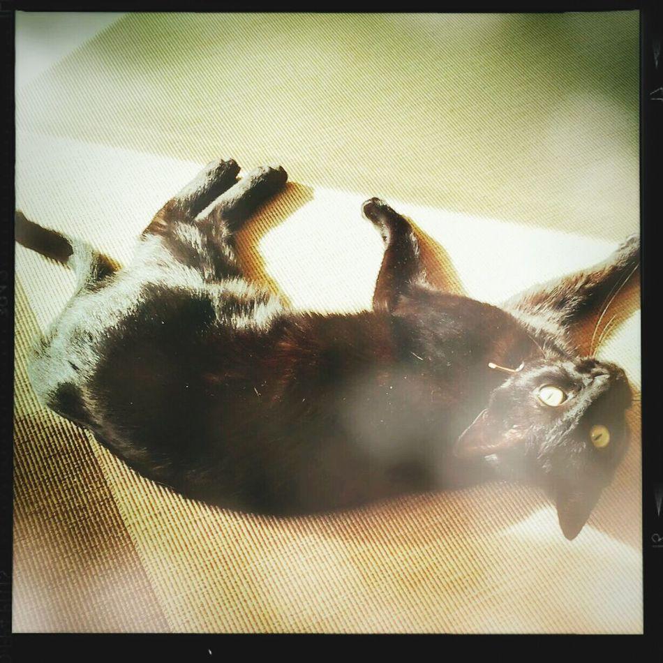 Relaxing Catcatcat Beautiful ♥
