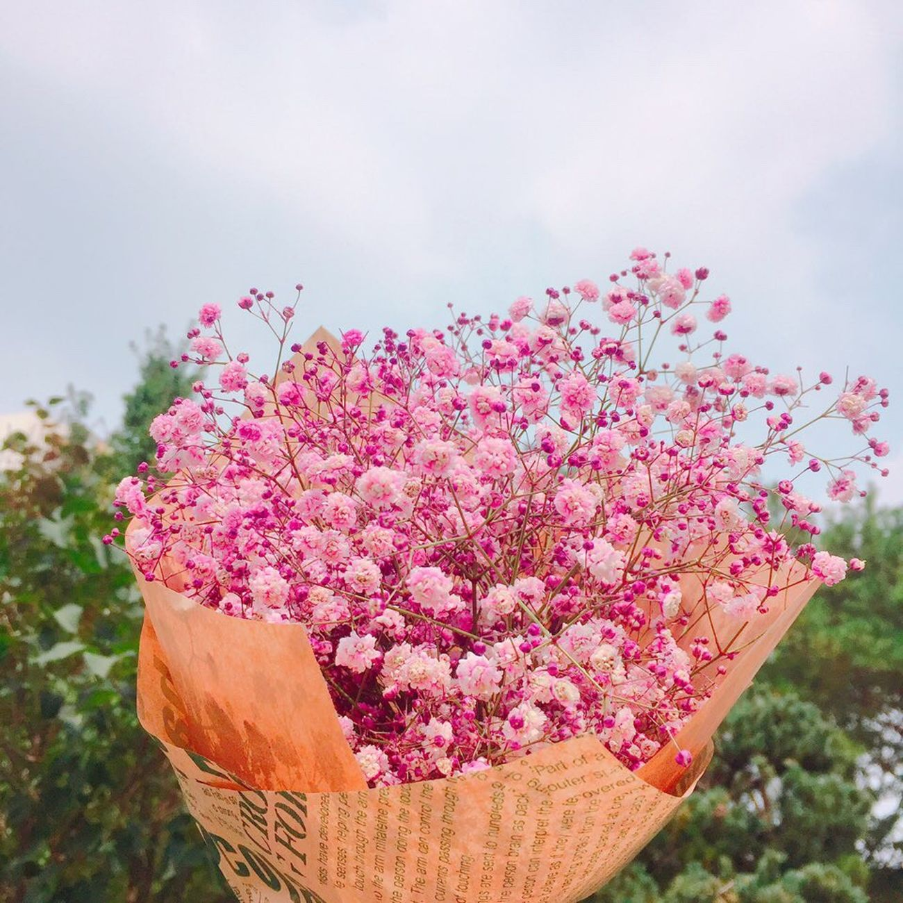 Common Gypsophila Flower Pink Color To  Girlfriend DAIN