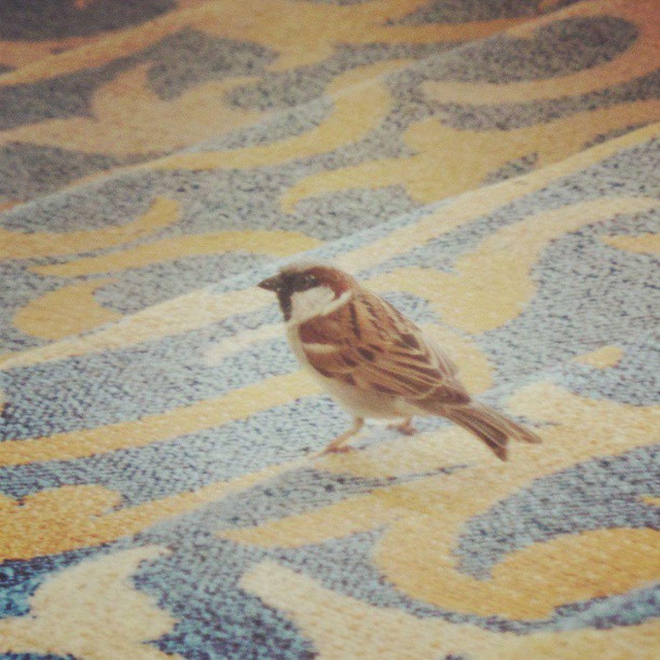 Sheraton Hotel Bird Boring funny nothing doha Qatar