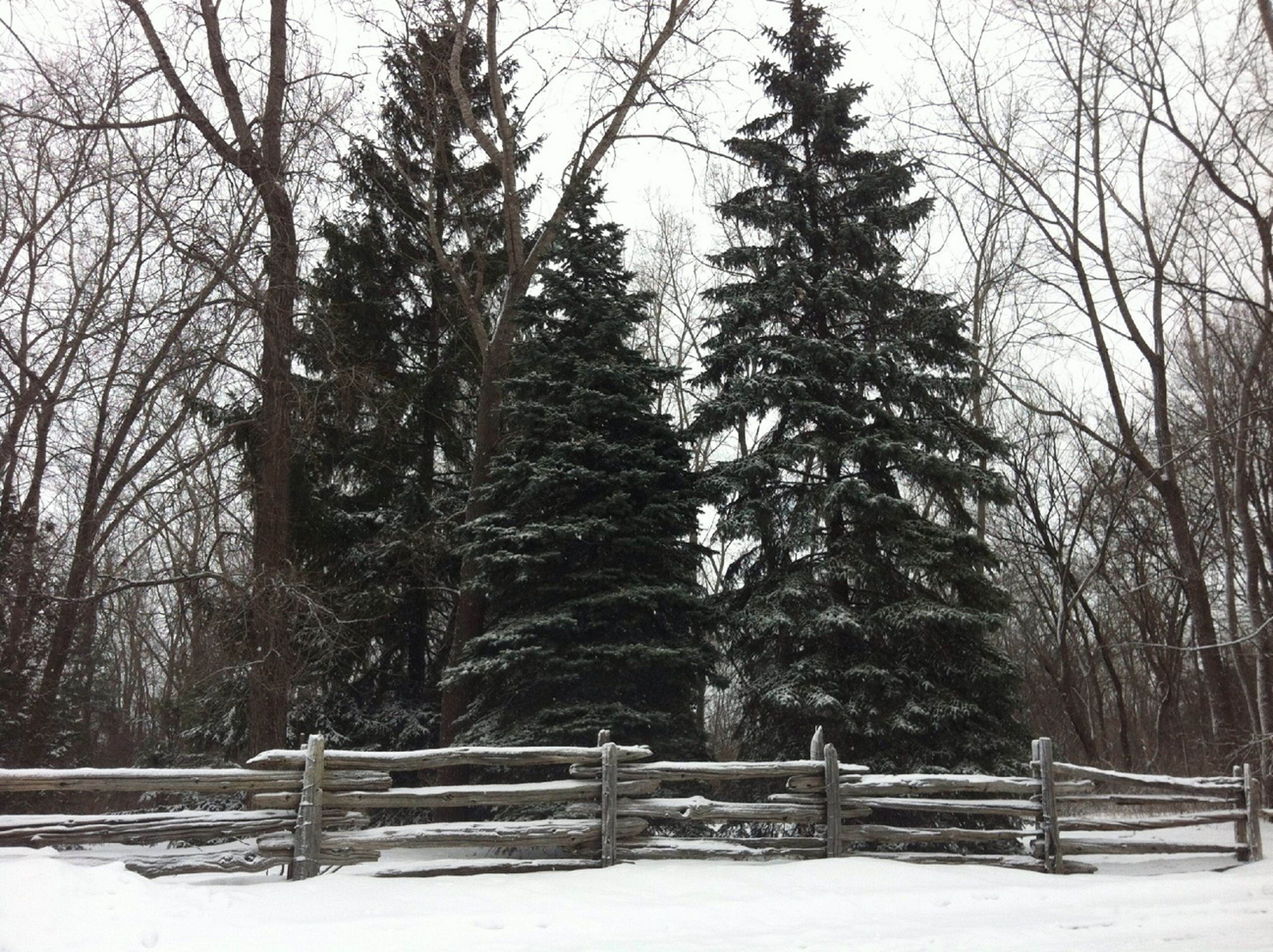 tree, winter, snow, cold temperature, tranquility, bare tree, tranquil scene, bench, season, nature, branch, tree trunk, weather, landscape, scenics, beauty in nature, field, covering, wood - material, empty