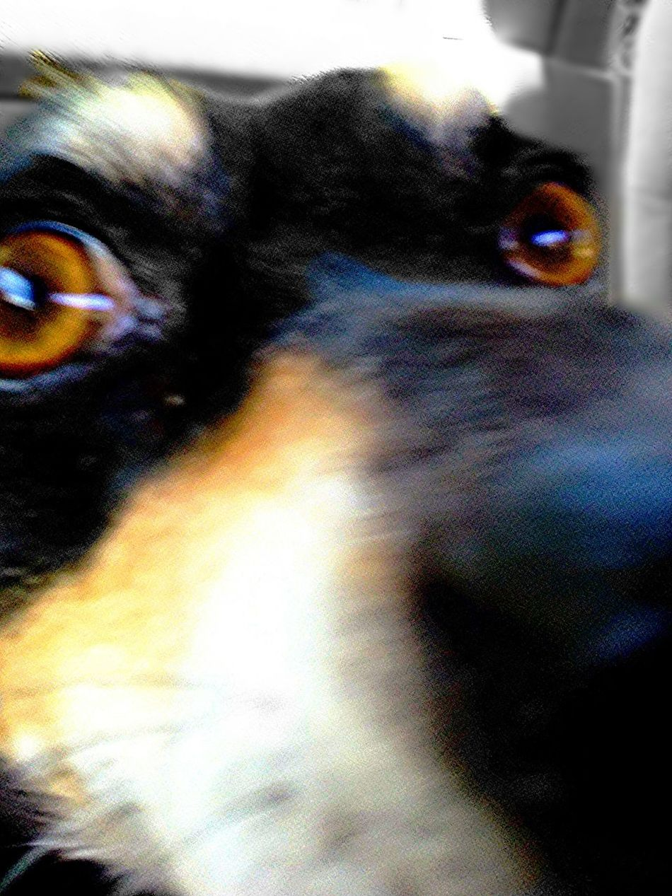 Puppy Eyes Dog Love Canine Lookout Portland Oregon PNW TYE