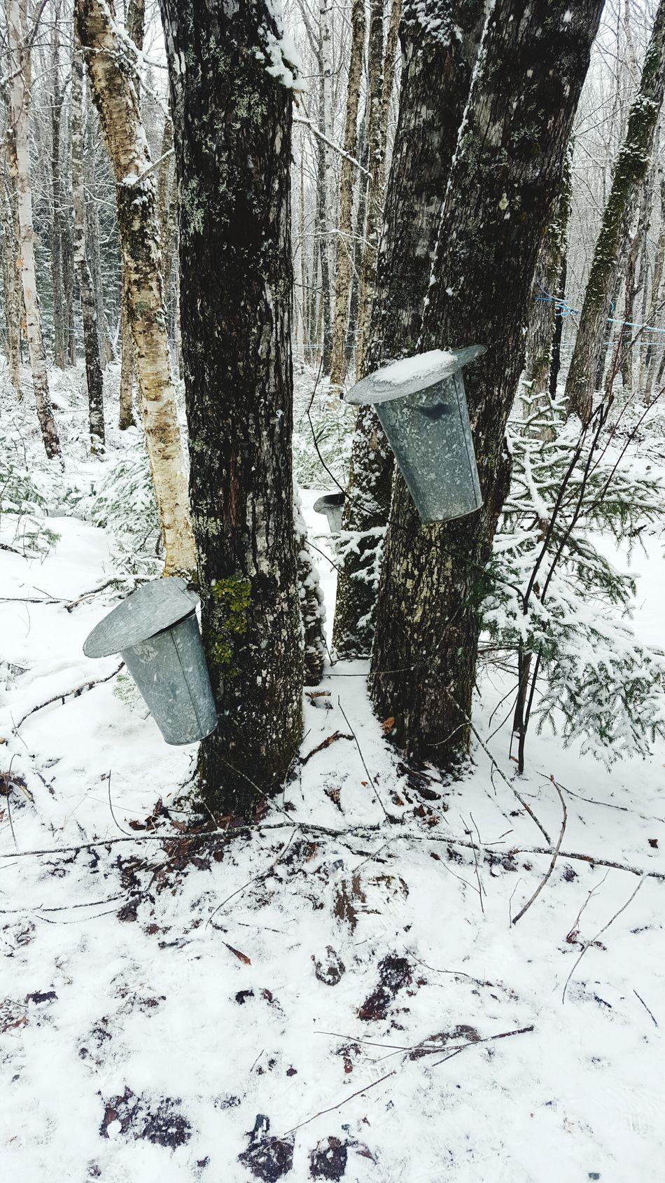 Snapshot Sugarwoods