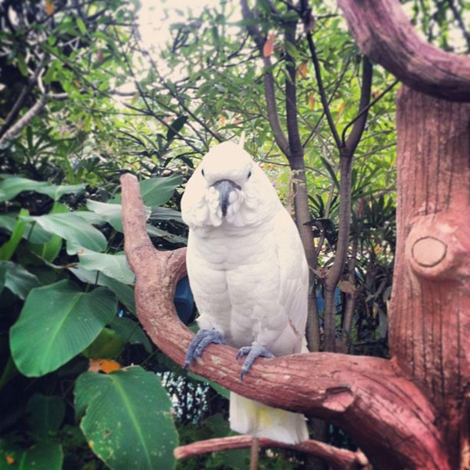 Kakaktua INDONESIA Iphonesia Burung