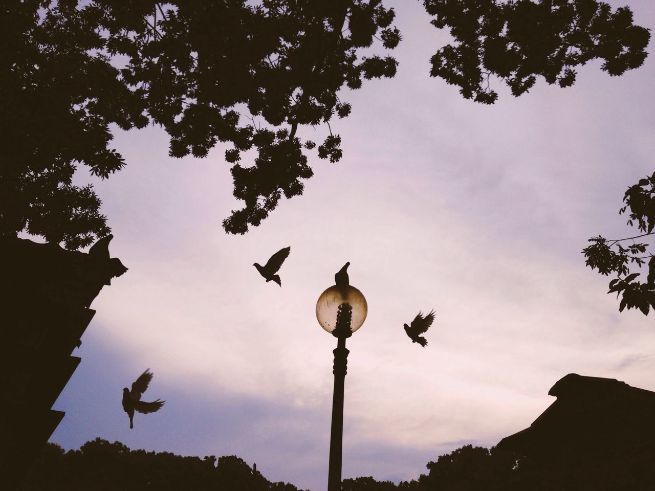 Twilight of Pigeons - Silhouette IPSEmotions The Illusionist - 2014 EyeEm Awards Light And Shadow
