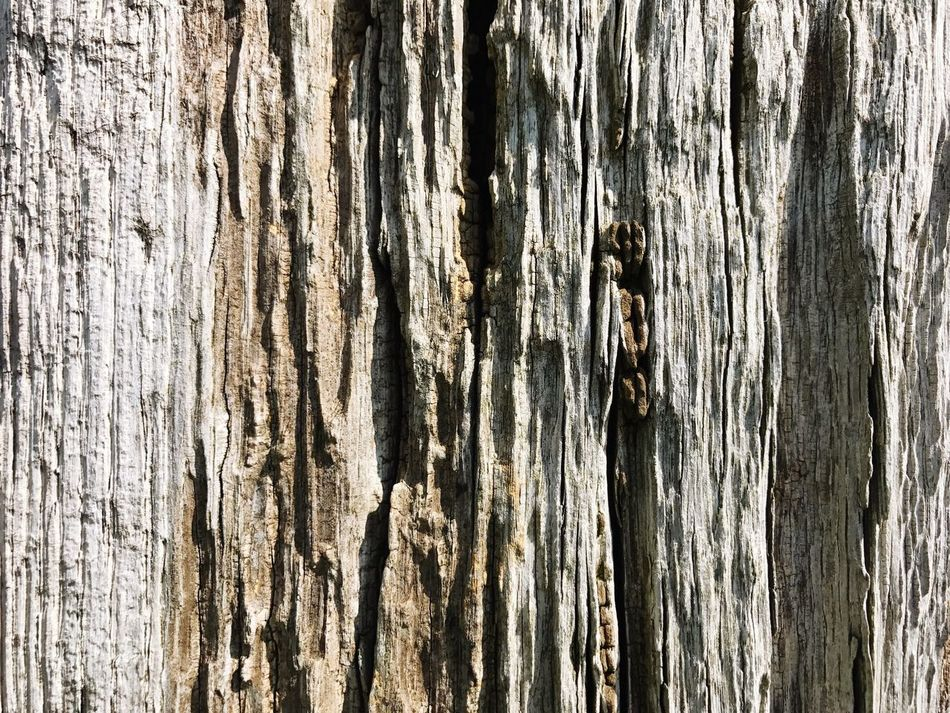 Wood Old Wood Textures And Surfaces Backgrounds Wood - Material Textured  Full Frame Close-up Wood Grain Nature Weathered No People Rough Outdoors Day Knotted Wood